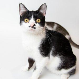 кошка с круглыми глазами
